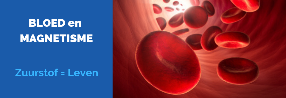 Dit is een sfeerfoto van rode bloedlichaampjes die door de aderen stromen. ENERGETIX Magneetsieraden bevorderen het zuurstoftransport, waardoor een betere doorbloeding ontstaat